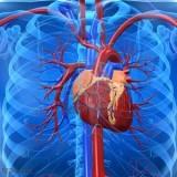 patologie-cardiovascolari